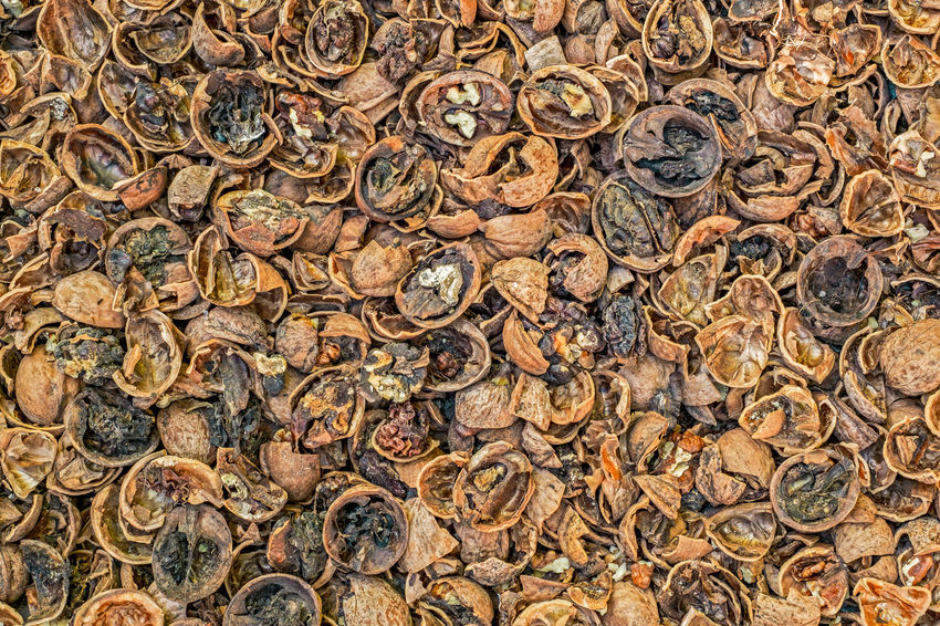 Cracked nuts infected with mold Bad Condition Mold Nuts Backgrounds Bad Close-up Corupted Cracked Day Decayed Defaced Full Frame Infected Mildew Mold Food Mold Mould Mouldy Nature No People Nuts And Seeds Nuts On The Ground Nutshell Outdoors Photograph Putrid Rotten