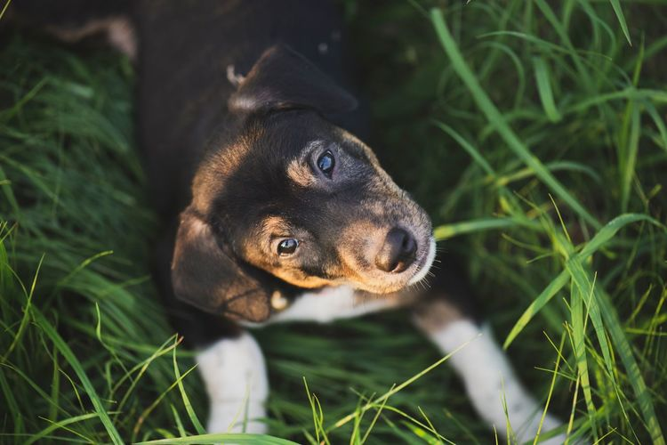 puppy Look Close-up Light And Shadow Puppy One Animal Animal Themes Animal Mammal Vertebrate Plant Grass Nature Dog Animal Wildlife Pets Animals In The Wild Day Domestic Animals Close-up Field Land Animal Body Part No People