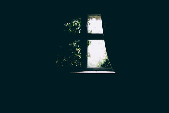 Window Dark Indoors  Tree Glass - Material Plant Copy Space Day No People Nature Home Interior Sunlight Domestic Room House Transparent Silhouette Architecture Growth Darkroom Window Frame