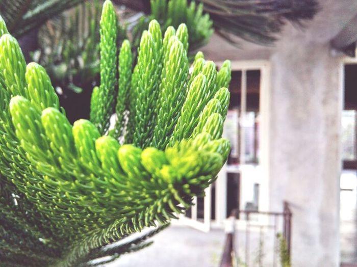 EyeEmNewHere Minimalist Architecture Nature_collection Eyeemphotography Nature Life Tree Pinewoods