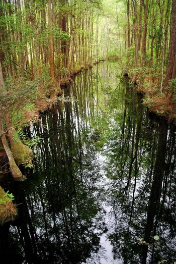 Georgia Lost In The Landscape Okefenokee National Wildlife Refuge Cypress Trees  Forest Nature No People Okefenokee Swamp Outdoors Reflections Reflections In The Water Scenics Tranquil Scene Water Perspectives On Nature