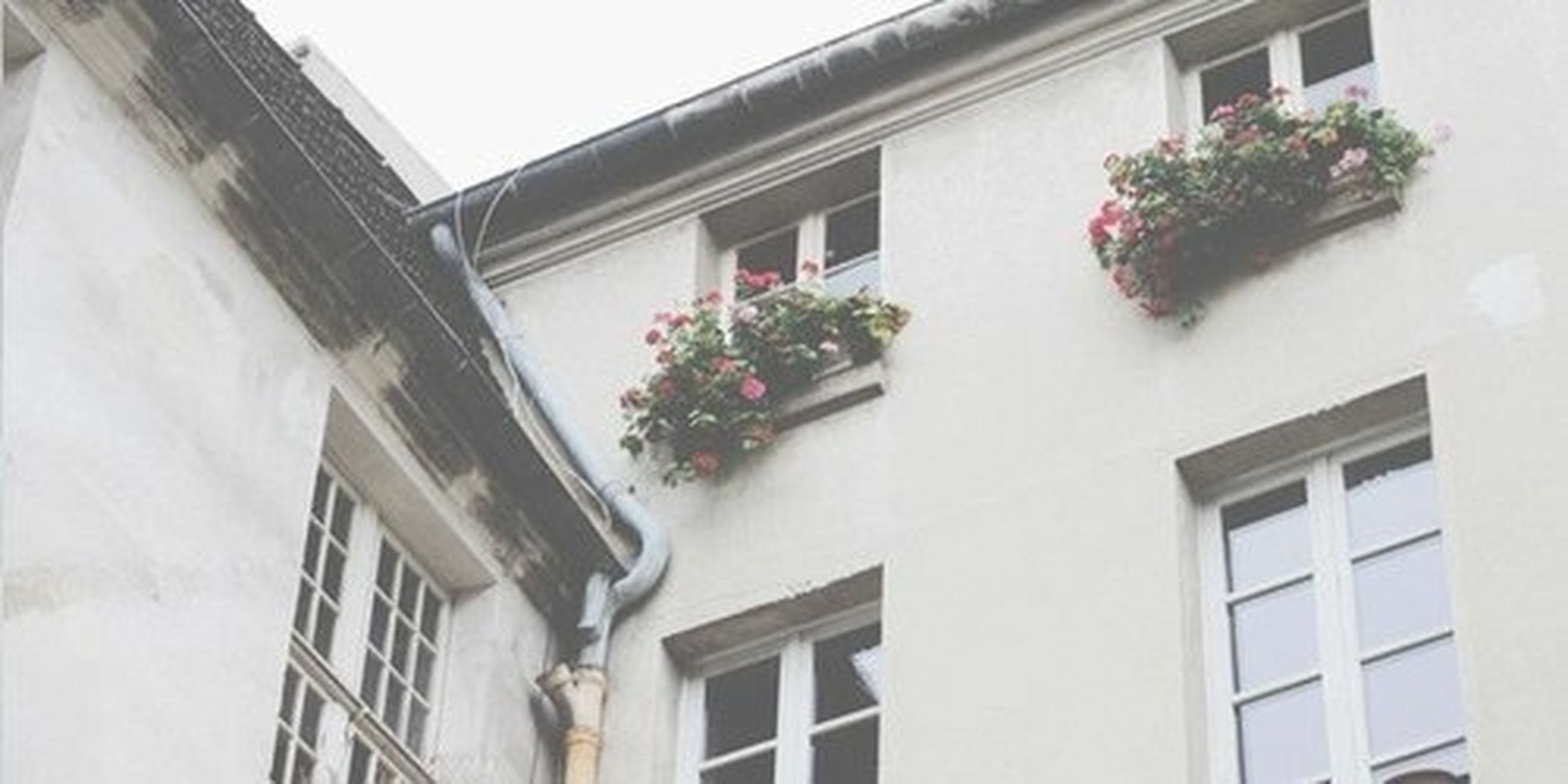 architecture, building exterior, built structure, window, residential building, residential structure, house, growth, low angle view, flower, potted plant, balcony, plant, building, day, no people, outdoors, nature, sunlight, leaf