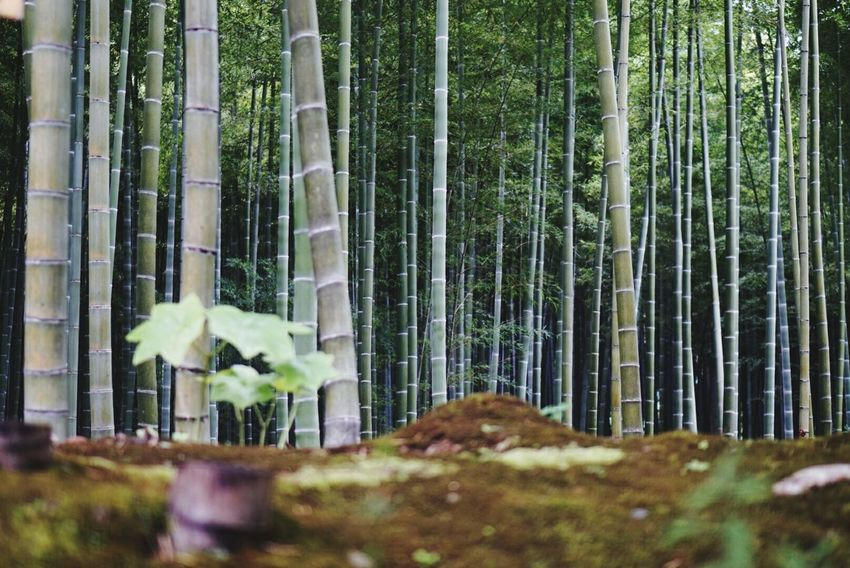 Meditating Praying Peace And Love Japan Kyoto Relaxing Beautiful Relaxing Time Green Enjoying The View