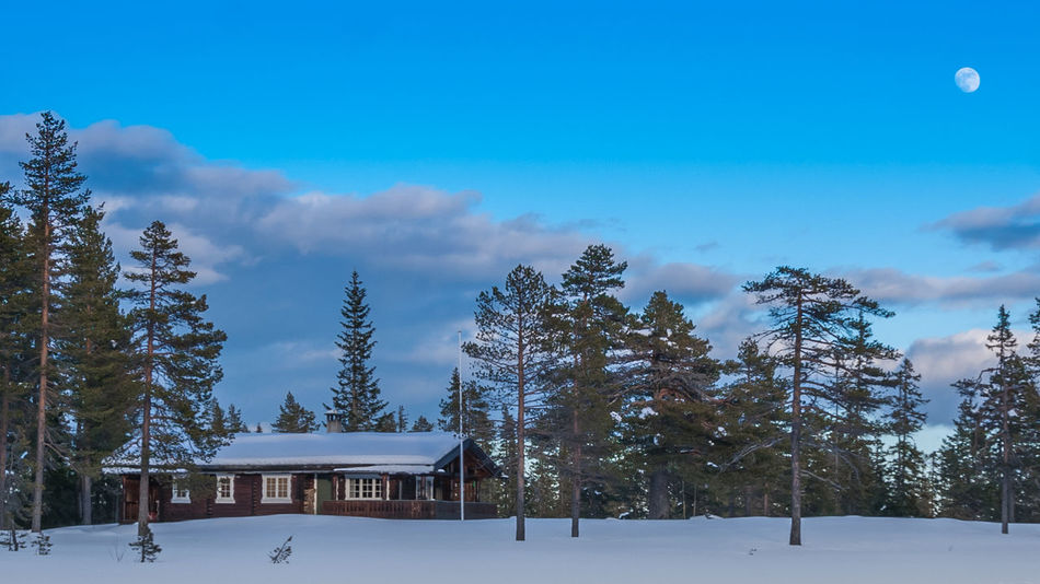 Beauty In Nature Blue Chalet Cloud - Sky Cold Temperature Forest Landscape Log Cabin Mountain Nature No People Outdoors Pinaceae Pine Tree Pine Woodland Roof Scenics Sky Snow Tranquil Scene Travel Destinations Tree Vacations Winter WoodLand