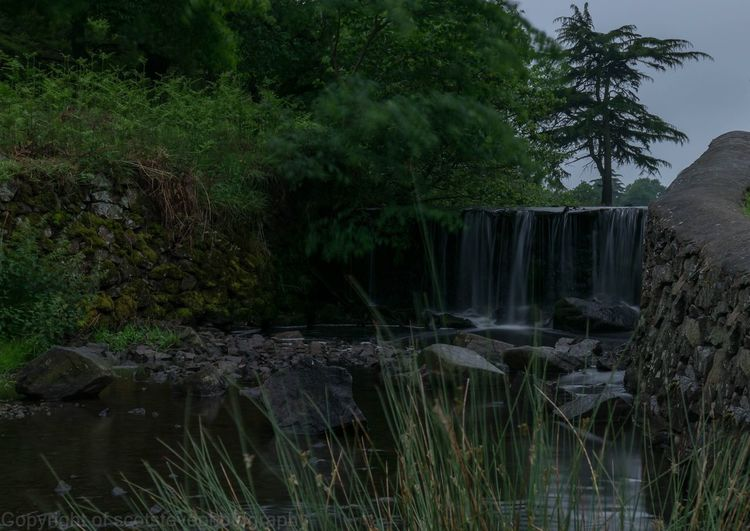 An old waterfall Tree Waterfall Nature Water Growth Beauty In Nature Outdoors No People River Scenics Forest Travel Destinations Plant Day Sky