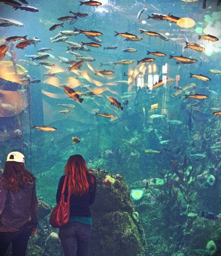 Reflection Light Glare Observing Life Water What Are YOU Looking At? Aquarium Watching Fish Water Life