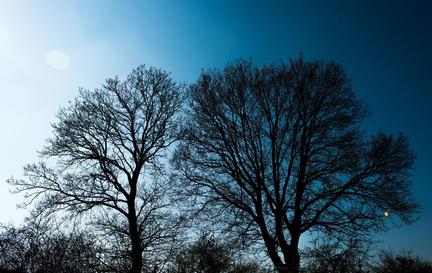 Blue Blue Sky Branch Day Nature No People Outdoors Shade Shades Of Nature Sky Sun Sunbeam Sunbeam Through The Trees Sunbeams Sunbeams Through Tree Sunlight Sunlight ☀ Tree Trees Trees And Nature Trees And Sky Treescollection Live For The Story