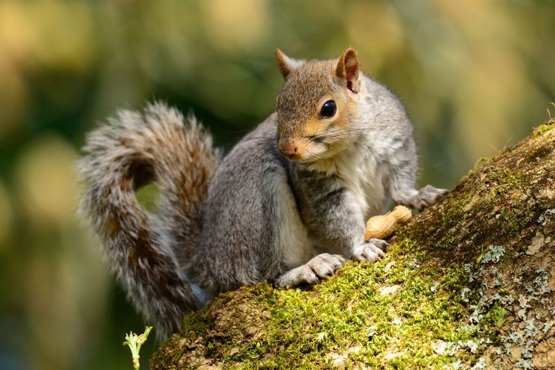 Close-up of squirrel outdoors