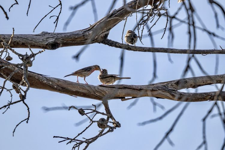 mother bird feeding baby bird Mother And Baby Tree Animal Wildlife Animal Animal Themes Branch Vertebrate Animals In The Wild Bird Perching Plant Low Angle View Group Of Animals Sky Bare Tree Nature Day No People Focus On Foreground Two Animals Outdoors Animal Family Baby Bird