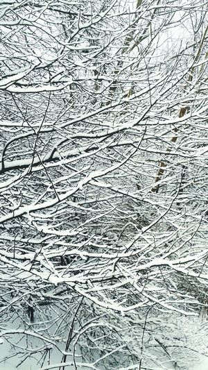 Winter Nature Outside Snow And Trees Taking Photos Check This Out Beautiful Nature branches.
