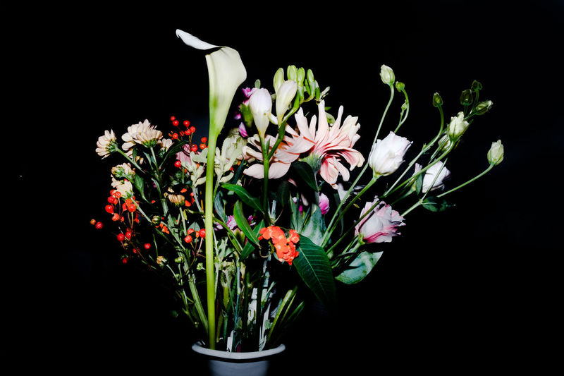 Beauty In Nature Black Background Bouquet Close-up Day Flower Flower Arrangement Flower Head Fragility Freshness Growth Nature No People Outdoors Petal