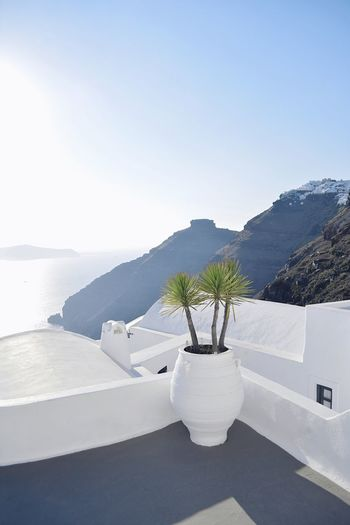 Greek postcard Postcard The Great Outdoors - 2018 EyeEm Awards EyeEm Gallery EyeEm Selects TheWeekOnEyeEM The Week on EyeEm EyeEm Best Shots The Traveler - 2018 EyeEm Awards Vacations Travel Destinations Travel Greek Islands Santorini, Greece Santorini Nature Plant Beauty In Nature Water Scenics - Nature Day Sky Tranquility Tranquil Scene White Color Architecture Outdoors Sunlight