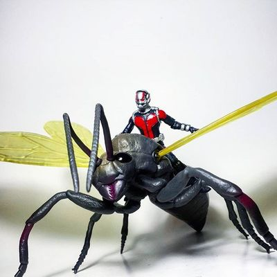 Antman Scottlang Hankpym Marvel Marvellegends Marvelcomics Marvelnation MarvelFan Toyfan Actionfigure Toys Toyphotography Toypizza Toysarehellasick Toycollector Toycommunity Toycollection Marveluniverse Disney Avengers Thefigureverse