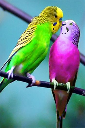 Sevgi her dilde aynı anlatmasını bilene...💯