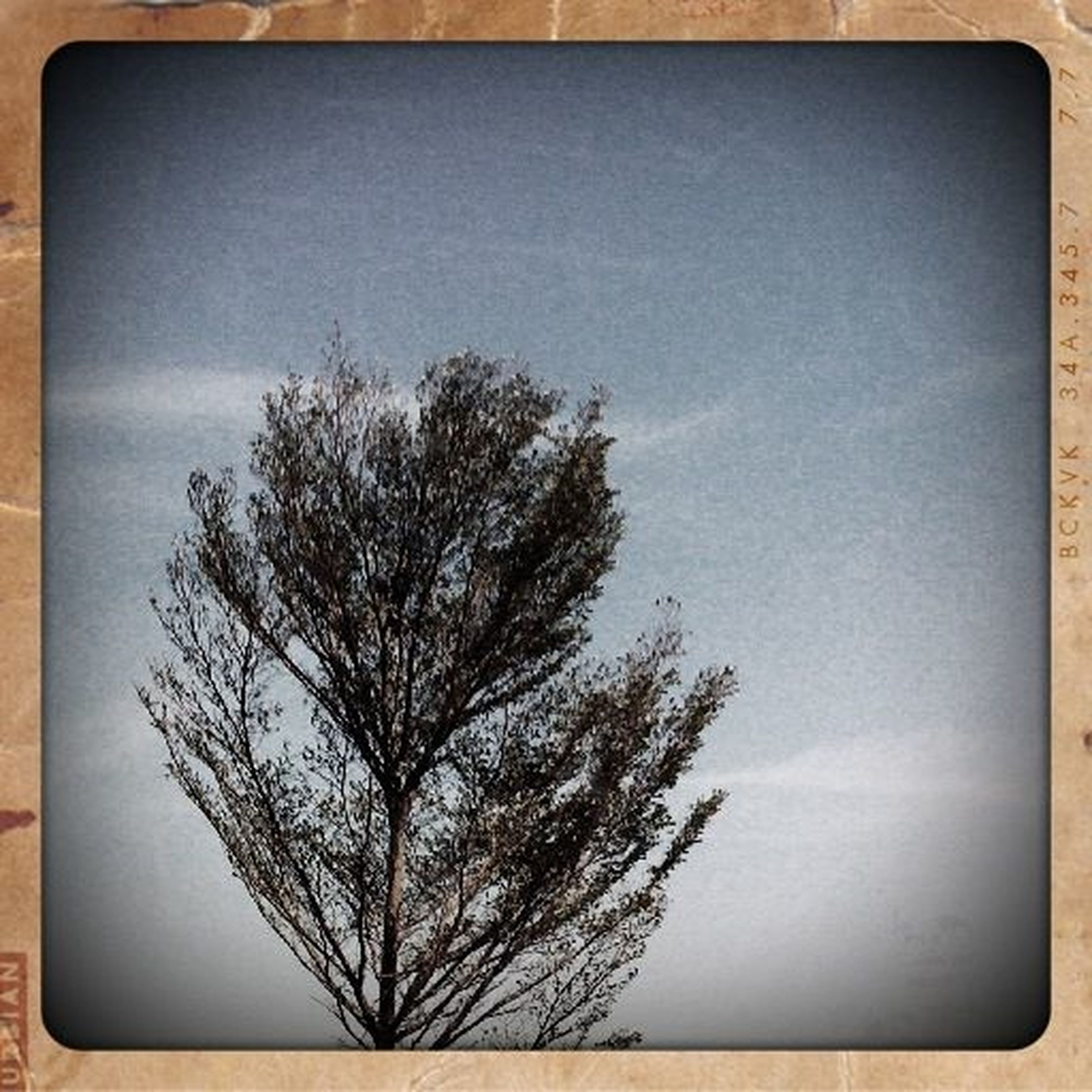 transfer print, auto post production filter, tree, bare tree, sky, branch, low angle view, silhouette, tranquility, nature, beauty in nature, tranquil scene, scenics, cloud - sky, single tree, no people, outdoors, vignette, cloud, growth