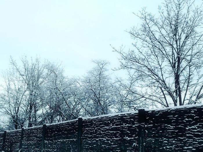 'Winters Here To Stay..' Nature