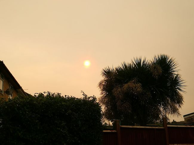 Saharan Dust Dust In The Wind Dust In Light Dust In The Air Strange Weather Strange Light Dust Storm Horizon Beauty In Nature Nature Scenics Sunlight Sun Eclipse Tree Outdoors Low Angle View No People Nature Sky Growth Palm Tree Beauty In Nature Day
