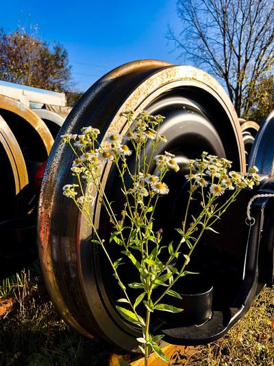 Train and nature EyeEm Best Shots EyeEm Gallery EyeEm Selects EyeEmNewHere Plant Day Nature No People Tree Sky Wheel Close-up Sunlight Outdoors Transportation Growth Mode Of Transportation Land Vehicle Field Circle Architecture Building Exterior Flowering Plant Built Structure