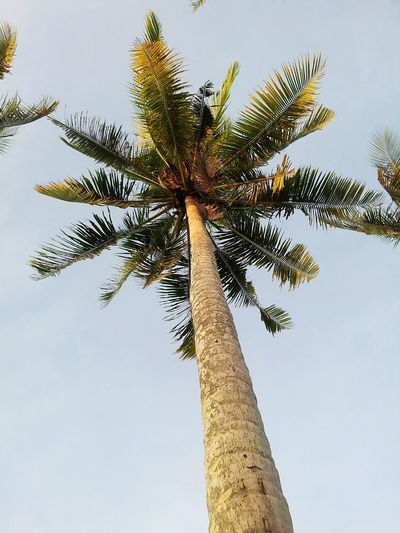 I wish my self-esteem is as tall as this coco tree