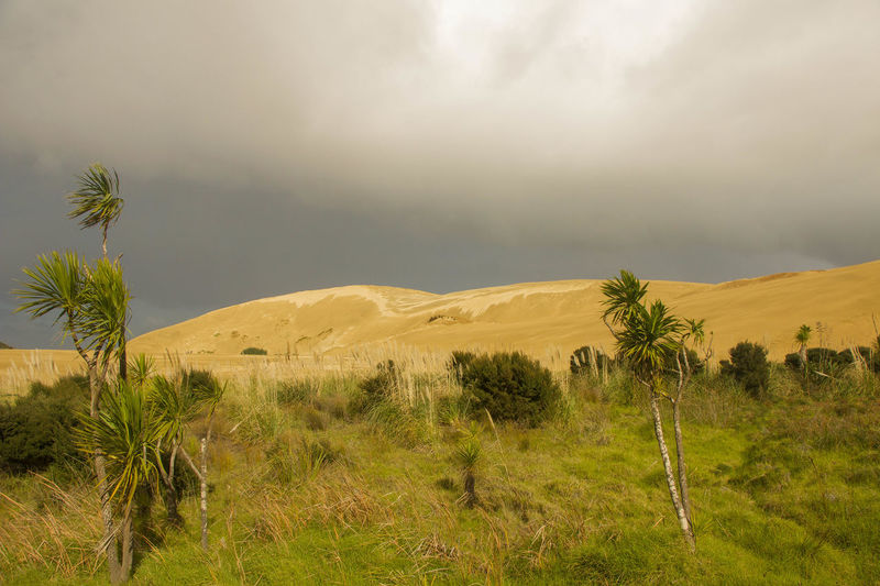 Africa Awesome Beauty In Nature Cloud - Sky Day Desert Landscape Mountain National Park Nature New Zealand No People Outdoors Palm Tree Sand Sand & Sea Sand Dune Scenics Sight Sightseeing Social Issues Southern Hemisphere Surfing Travelling Tree