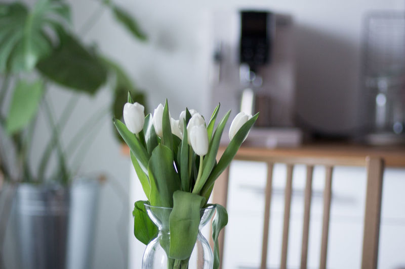 Flower Plant Flowering Plant No People Freshness Indoors  Nature Green Color Fragility Vulnerability  Close-up Beauty In Nature Vase Focus On Foreground Growth Leaf Technology Domestic Room White Color Flower Arrangement Kitchen Home Interior Tulips