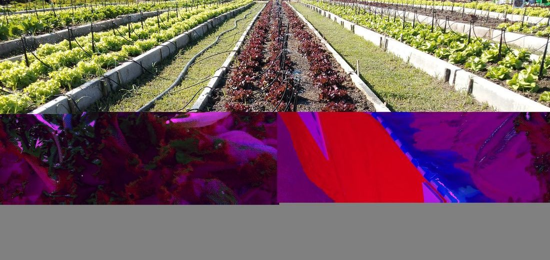 Low angle view of purple flowering plants