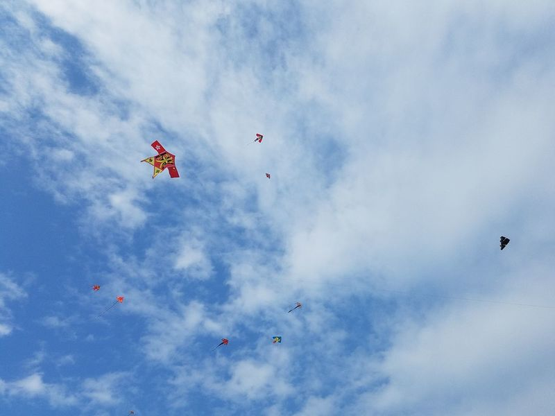 kites in the sky EyeEm Selects Bird Teamwork Flying Airshow Mid-air Flock Of Birds Togetherness Motion Kite - Toy Blue