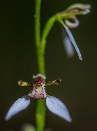 Beauty In Nature Beginnings Close-up Day Flower Fragility Freshness Growth Nature No People Orchid Outdoors Plant Pollination
