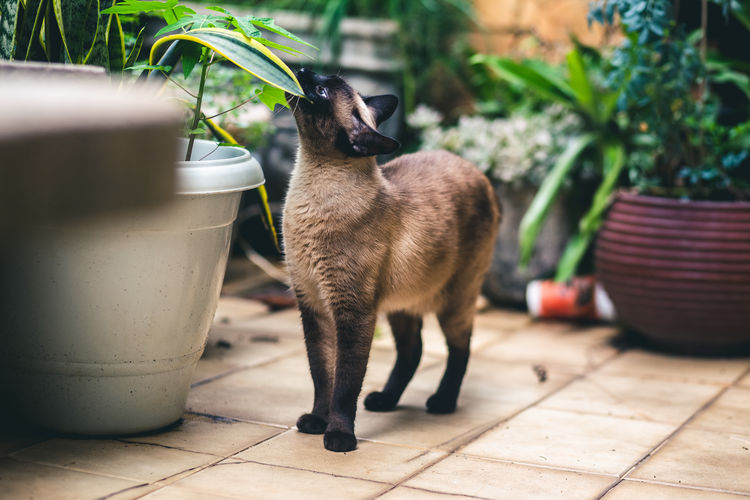 Cat standing in potted plant