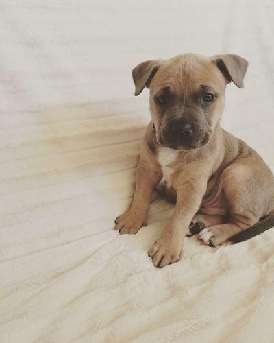 EyeEm Selects Dog Pets One Animal Domestic Animals Animal Sand Puppy