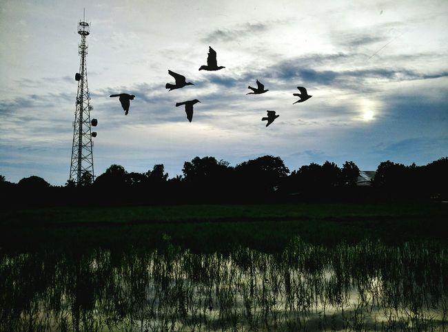 Landscape Mobilephotography MIphotography Xiaomimi4 Mobilephotographyph