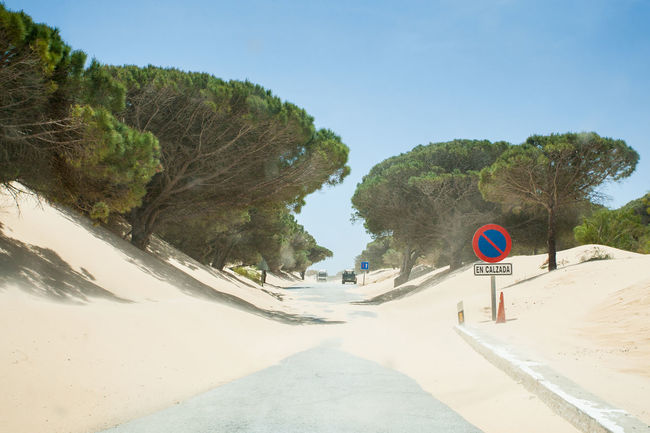 Dunes Road SPAIN Trees Beauty In Nature Day Direction Dune Dunescape Moving Dunes Moving Sand Nature No People Obstruction Outdoors Road Road Sign Road Trouble Sand Sand Dune Sand Dunes Sand Storm Scenics - Nature Sign The Way Forward The Street Photographer - 2018 EyeEm Awards The Great Outdoors - 2018 EyeEm Awards The Traveler - 2018 EyeEm Awards Summer Road Tripping