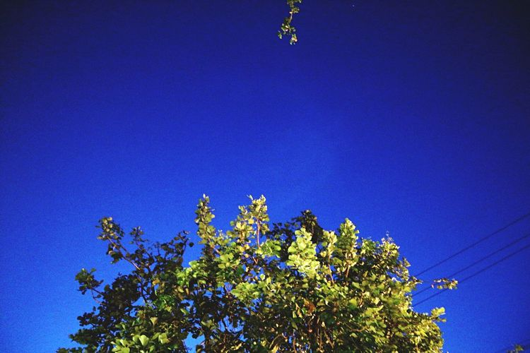 Low Angle View Blue Clear Sky Day Tree Growth Outdoors Nature No People Beauty In Nature Sky Freshness