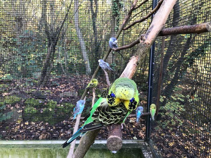 Bird Tree Plant