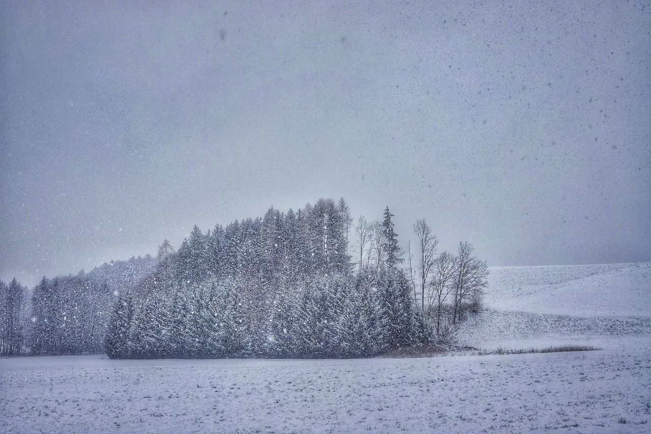 snow, cold temperature, winter, tree, plant, sky, beauty in nature, tranquil scene, no people, nature, tranquility, scenics - nature, land, environment, snowing, day, landscape, covering, field, outdoors, extreme weather