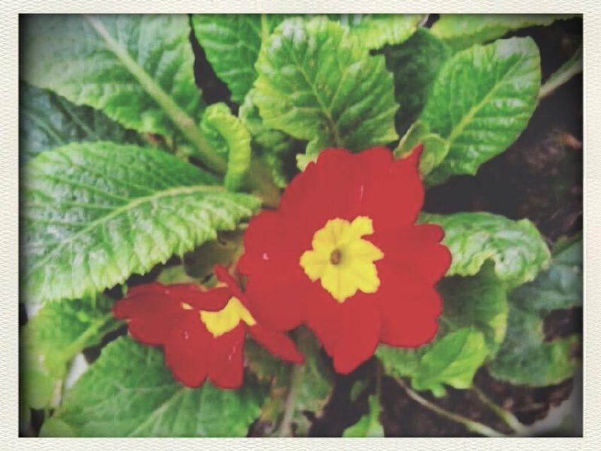 Flowers Nature Vintage Enjoying Life