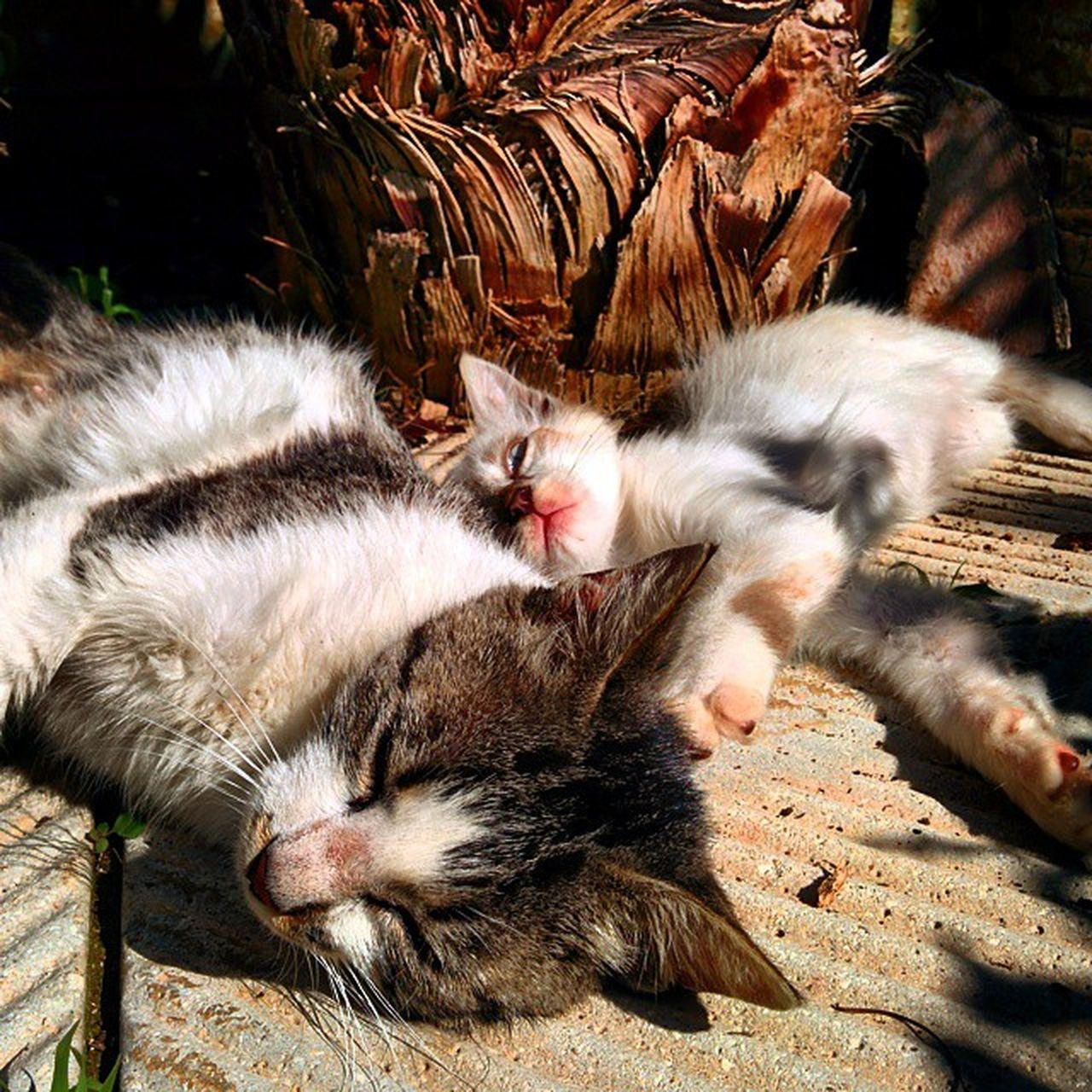 domestic cat, animal themes, feline, domestic animals, pets, one animal, day, whisker, mammal, cute, no people, relaxation, lying down, outdoors, nature, close-up, kitten