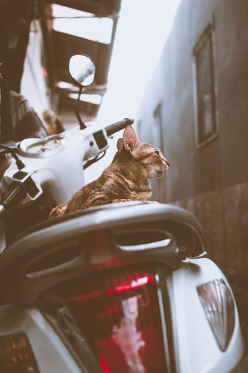 Close-up of cat on motor scooter