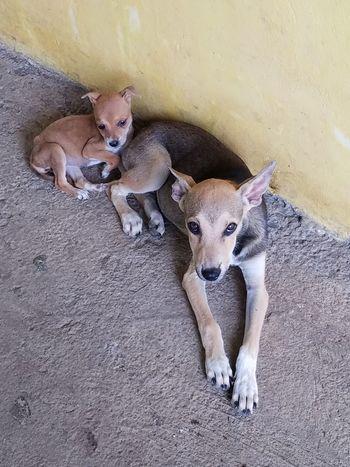 Animal Themes Dog No People Togetherness Wild Dogs Young Animal