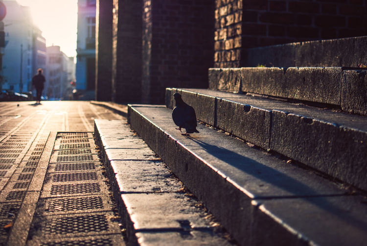 Animal Themes Animals In The Wild Architecture Bird Building Exterior Built Structure City Day Discover Your City EyeEm Gallery Light And Shadow Nature Nikon No People Outdoors Perching Shadow Streetphotography Sunlight Sunset The Week Of Eyeem