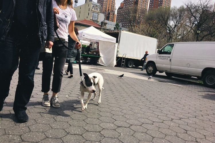 Low section of woman with dog walking on street