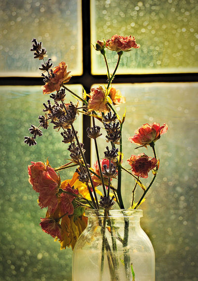 Close-up of red flowers in vase against window