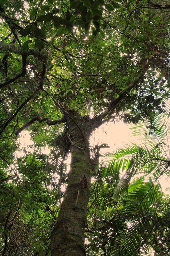 Tree Biology Ecology Nature Ambient Environment Biological Tree Branch Forest Sunlight Close-up Green Color Plant Life Botany