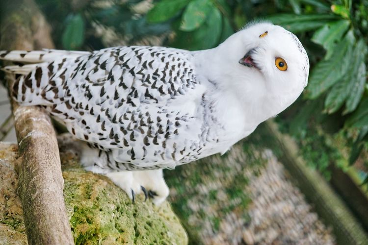 Bird of Alsaka