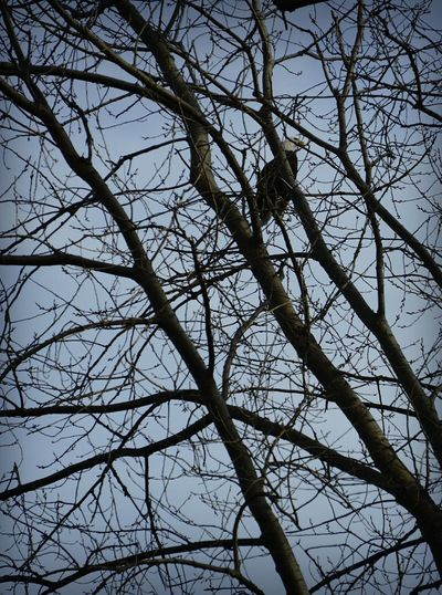 My first sighting of a Bald Eagle! He was a bit shy so this is the only shot I was able to get. I hope everyone has a weekend of extraordinary experiences! Low Angle View Branch Tree Nature No People Bare Tree Sky Growth Beauty In Nature Full Frame Day Backgrounds Outdoors Flower Clear Sky Freshness St Clair Metro Park EyeEm Nature Lover EyeEm Best Shots - Nature EyeEm Best Shots Autumn Birds Of EyeEm  Bald Eagle