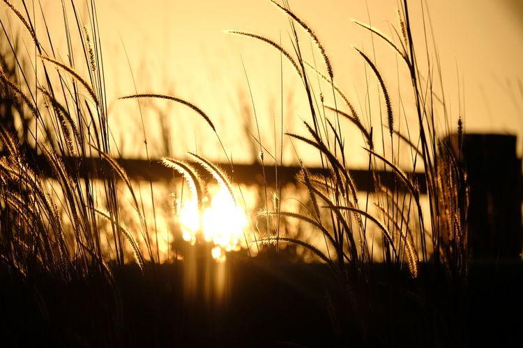 Shadows & Lights Water Bird Sunset Flying Silhouette Sky Grass Plant