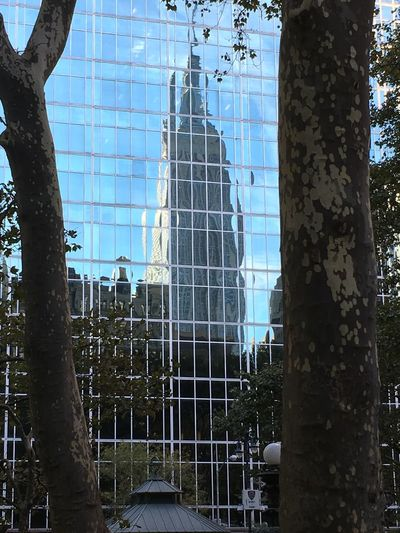 Bryant Park NYC Reflection Architecture Building Exterior Built Structure Close-up Day Growth Nature No People Outdoors Sky Tree Tree Trunk