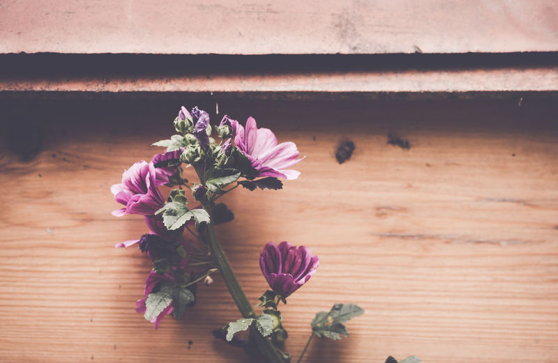 High angle view of purple flowers on wooden table