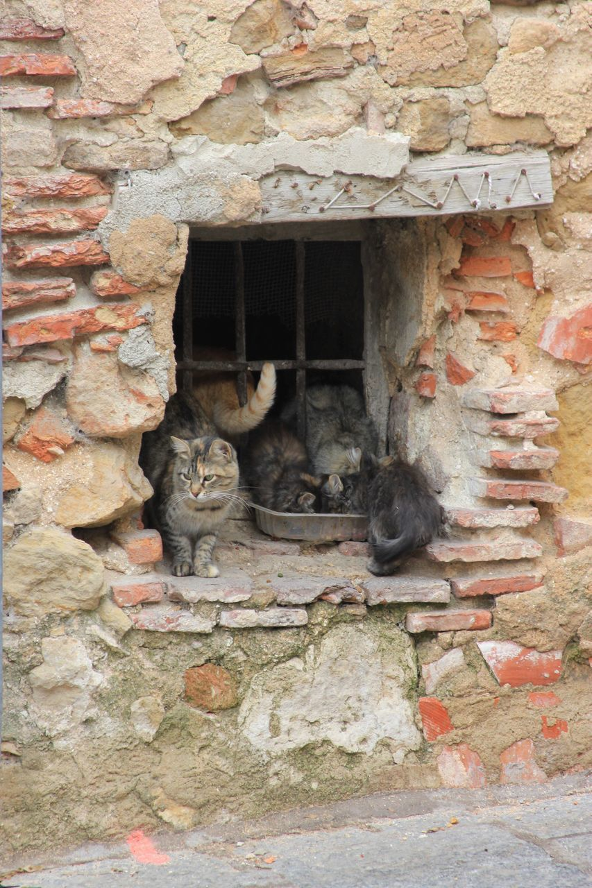 animal, animal themes, mammal, no people, one animal, vertebrate, pets, domestic animals, domestic, architecture, built structure, day, cat, domestic cat, wall - building feature, feline, wall, window, animal wildlife, stone wall