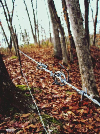 Barbed. Barbed Wire Nature Focus On Foreground Outdoors Forest Day Man Made Private Property Down The Wire